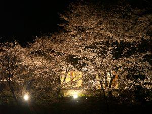 Sakura7